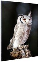 Dwergooruil Aluminium 40x60 cm - Foto print op Aluminium (metaal wanddecoratie)