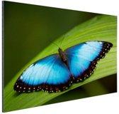 Morpho vlinder op blad Aluminium 30x20 cm - klein - Foto print op Aluminium (metaal wanddecoratie)