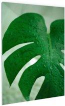 FotoCadeau.nl - Botanische print druppels op een blad Glas 80x120 cm - Foto print op Glas (Plexiglas wanddecoratie)