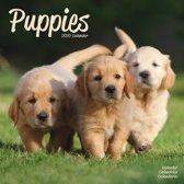 Puppies Kalender 2020
