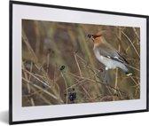 Foto in lijst - Pestvogel met een zwart besje in de bek fotolijst zwart met witte passe-partout 60x40 cm - Poster in lijst (Wanddecoratie woonkamer / slaapkamer)