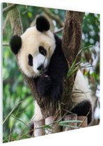 Panda welp Glas 90x60 cm - Foto print op Glas (Plexiglas wanddecoratie)