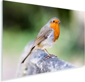 Roodborstje op een houten hekje Plexiglas 180x120 cm - Foto print op Glas (Plexiglas wanddecoratie) XXL / Groot formaat!