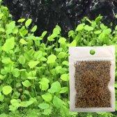 Hiden   Aquarium Graszaad - Planten   Love Leaf