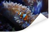 Een Nemo-vis zwemmend in een aquarium Poster 180x120 cm - Foto print op Poster (wanddecoratie woonkamer / slaapkamer) XXL / Groot formaat!