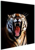 Brullende tijger zwarte achtergrond Glas 50x50 cm - Foto print op Glas (Plexiglas wanddecoratie)