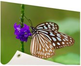 Vlinder paarse bloem Tuinposter 200x100 cm - Tuindoek / Buitencanvas / Schilderijen voor buiten (tuin decoratie) XXL / Groot formaat!