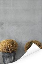 Buxusstruiken in potten Poster 20x30 cm - klein - Foto print op Poster (wanddecoratie woonkamer / slaapkamer)