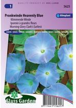 Sluis Garden Klimmende Winde Clarks Blue (ipomoea)