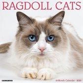 Ragdoll Kalender 2020