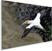 Luchtfoto van een zwevende Jan-van-gent Plexiglas 90x60 cm - Foto print op Glas (Plexiglas wanddecoratie)