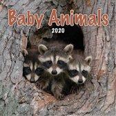 Kalender 2020 baby dieren (30,5 x 30,5)