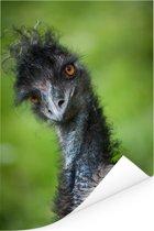 Een emoe kijkt recht in de camera Poster 120x180 cm - Foto print op Poster (wanddecoratie woonkamer / slaapkamer) XXL / Groot formaat!