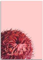 Rode bloem poster DesignClaud - Bloemstillevens – Rood – A3 + Fotolijst wit