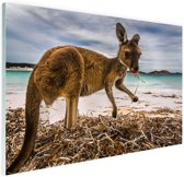 Wallaby op het strand Glas 180x120 cm - Foto print op Glas (Plexiglas wanddecoratie) XXL / Groot formaat!