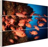 Oranje vissen in koraalrif Hout 30x20 cm - klein - Foto print op Hout (Wanddecoratie)