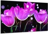 Glasschilderij Tulp | Paars, Zwart | 120x70cm 1Luik | Foto print op Glas |  F005062