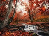 Papermoon Foggy Forest Creek Vlies Fotobehang 400x260cm 8-Banen