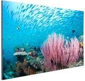 FotoCadeau.nl - Rif met een school vissen Aluminium 30x20 cm - Foto print op Aluminium (metaal wanddecoratie)