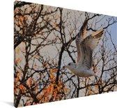 Ringsnavelmeeuw vliegt langs de herfst gekleurde bomen Canvas 90x60 cm - Foto print op Canvas schilderij (Wanddecoratie woonkamer / slaapkamer)