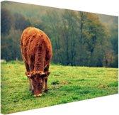 FotoCadeau.nl - Koe in de herfst Canvas 120x80 cm - Foto print op Canvas schilderij (Wanddecoratie)