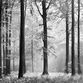 Fotobehang Avalon - 366 x 254 cm - Grijs