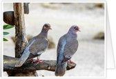 Mooie wenskaarten met exclusieve natuurfoto's - Vogels