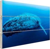 Jonge baleinwalvis onder water Hout 120x80 cm - Foto print op Hout (Wanddecoratie)