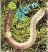 Kleine beestjes - Worm