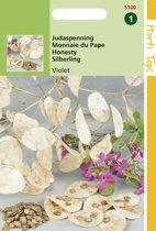 Hortitops Zaden - Judaspenning Violet (Lunaria annua)