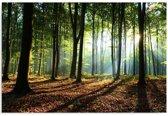 Schilderij - Het bos, 1 deel