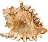 Nobby aqua deco zeeschelp 17,5 x 16 x 12,5 cm