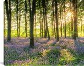 Een bos bedekt met sterhyacinten tijdens een zonnige dag Canvas 80x40 cm - Foto print op Canvas schilderij (Wanddecoratie woonkamer / slaapkamer)