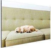Slapende puppy op de bank Aluminium 90x60 cm - Foto print op Aluminium (metaal wanddecoratie)