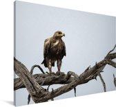 Steppearend hoog in een boom Canvas 180x120 cm - Foto print op Canvas schilderij (Wanddecoratie woonkamer / slaapkamer) XXL / Groot formaat!