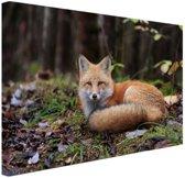 Rustende vos Canvas 30x20 cm - klein - Foto print op Canvas schilderij (Wanddecoratie woonkamer / slaapkamer) / Dieren Canvas Schilderijen