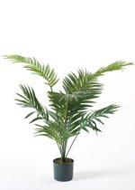 Emerald - Palm Paradijs - In plastic pot - 90 cm - Groen