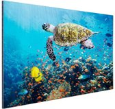 Schildpad bij koraalrif Aluminium 90x60 cm - Foto print op Aluminium (metaal wanddecoratie)