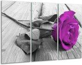 Glasschilderij Roos | Paars, Grijs | 120x80cm 3Luik | Foto print op Glas |  F001728