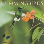 Hummingbirds Kalender 2020
