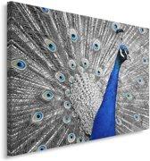 Schilderij - Pauw, blauw