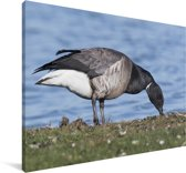 Rotgans opzoek naar voedsel op het land Canvas 90x60 cm - Foto print op Canvas schilderij (Wanddecoratie woonkamer / slaapkamer)