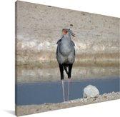 Secretarisvogel aan het water Canvas 160x120 cm - Foto print op Canvas schilderij (Wanddecoratie woonkamer / slaapkamer) XXL / Groot formaat!