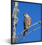 Foto in lijst - Smelleken in een boom onder een blauwe lucht fotolijst zwart 30x40 cm - Poster in lijst (Wanddecoratie woonkamer / slaapkamer)