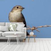 Fotobehang vinyl - Een bonte vliegenvanger met een blauwe lucht op de achtergrond breedte 360 cm x hoogte 270 cm - Foto print op behang (in 7 formaten beschikbaar)