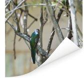 Narina-trogon in een boom Poster 80x60 cm - Foto print op Poster (wanddecoratie woonkamer / slaapkamer)