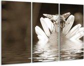 Schilderij | Canvas Schilderij Bloem | Sepia | 120x80cm 3Luik | Foto print op Canvas