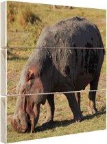 Grazende nijlpaard Hout 160x120 cm - Foto print op Hout (Wanddecoratie) XXL / Groot formaat!