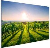 Wijngaard in Duitsland foto Aluminium 120x80 cm - Foto print op Aluminium (metaal wanddecoratie)