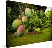 Mango's aan Canvas 180x120 cm - Foto print op Canvas schilderij (Wanddecoratie woonkamer / slaapkamer) XXL / Groot formaat!
